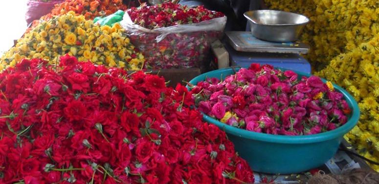 roses-india